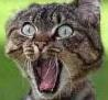 Bild på förvånad katt