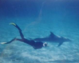 Bild på Martin som fridyker i havet med delfinen Oline