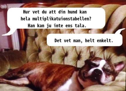 Satirisk bild om hur man vet att hundar på DN kan multiplikationstabellen. Svar: Det vet man, helt enkelt.