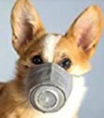 Bild på hund i skyddsmask