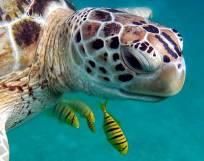 Bild på sköldpadda
